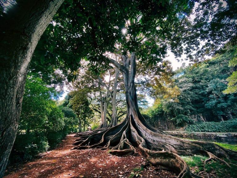 Installing Roots Trellis / Bedrock / Sage